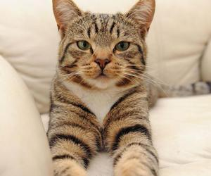 animals, cat, and cute animal image