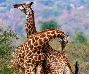 africa, animal, and love image