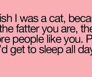 cat, fat, and sleep image