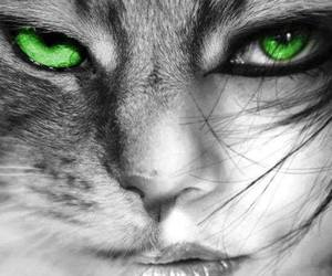 cat, green, and eyes image