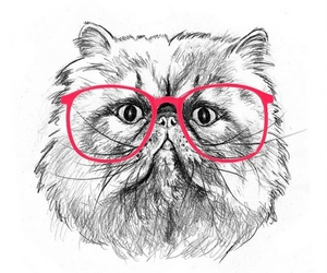 cat, drawing, and glasses image