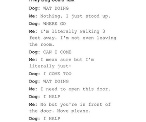dog, dogs, and funny image
