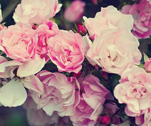 awsome, pink, and roses image