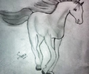 horse and sketch image