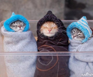 cold, kitty, and cute image