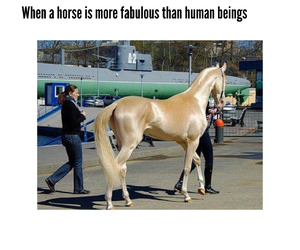 fabulous, funny, and golden image