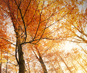 colors, fall, and forest image