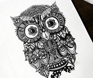 owl, bird, and draw image