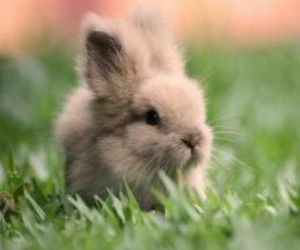lapin, mignon, and animaux image