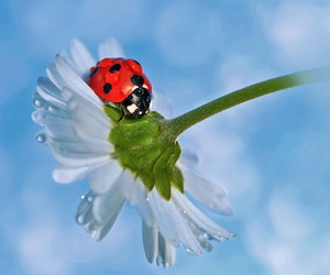 enchanting, ladybugs, and photos image
