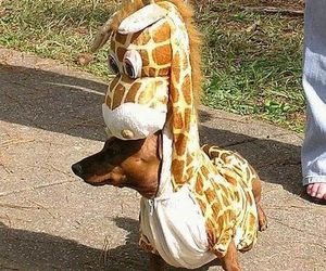 dog, giraffe, and animal image