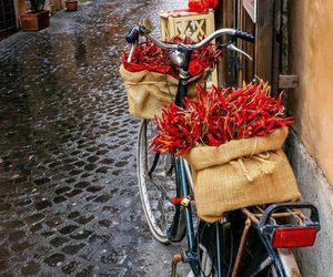 photography, red, and bicycle image