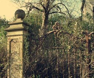 gate and nature image