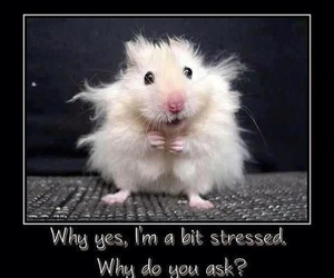 funny, hamster, and animal image