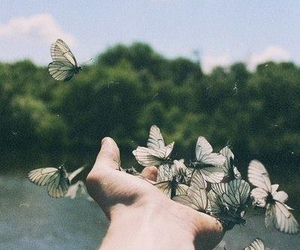 butterfly, free, and nature image