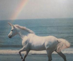 unicorn, rainbow, and sea image