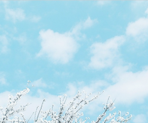 blossoms, blue, and clouds image
