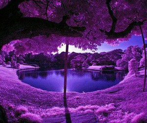 purple, water, and woods image