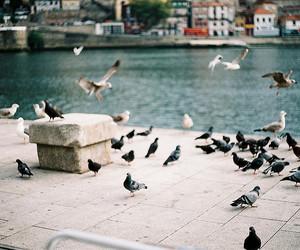bird, vintage, and pigeon image