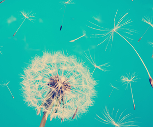 dandelion, flowers, and make a wish image