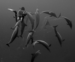 dolphin, girl, and nature image
