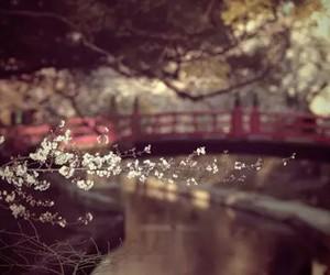 blossom, night, and cherry image