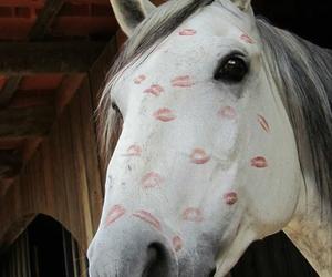 horse, kiss, and love image