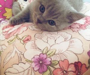 beautiful, cat, and eyes image
