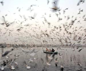 bird, boat, and sea image