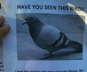 bird, funny, and lol image