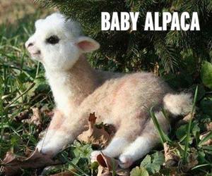 animal, baby, and sweet image