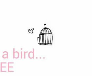 bird, case, and free image