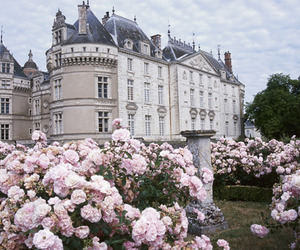 flowers, castle, and rose image