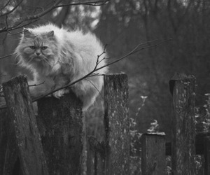 cat, photography, and black and white image