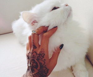 cat, tattoo, and white image
