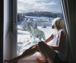 animals, Dream, and stripes image