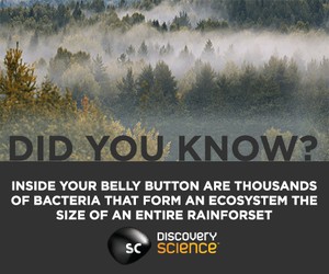 bacteria, discovery, and forest image
