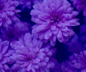 flowers, purple, and nature image