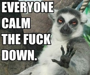 funny, lemurs, and calm the fuck down image