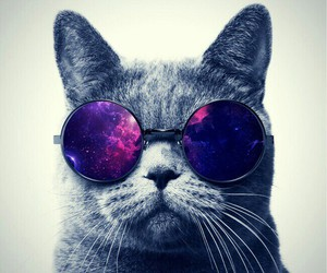 awesome, galaxy, and cat image