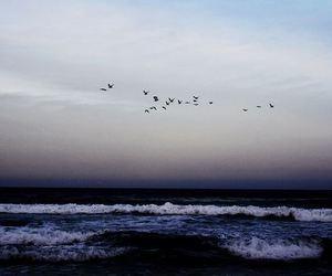 sea, bird, and sky image