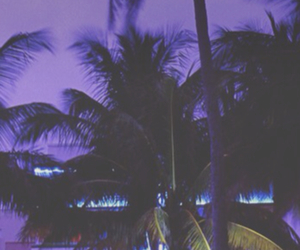 1, palm trees, and purple image