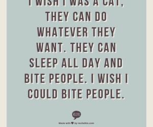 cat, haha, and I DO image