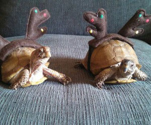adorable, turtle, and animals image