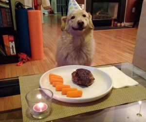 doggy, b-day, and pet image