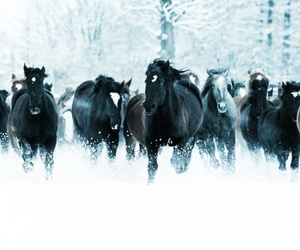 animals, beautiful, and horses image