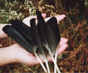feather and hands image