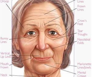 anatomy, drawing, and face image