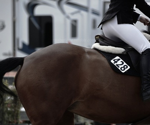 animal, horse, and sport image