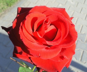 liebe, rose, and love image